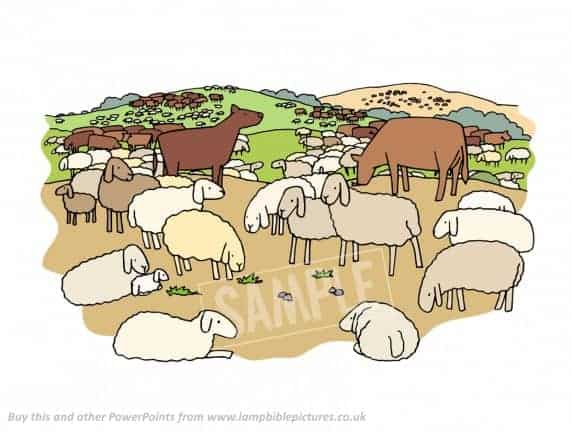 Lots of sheep and cows.