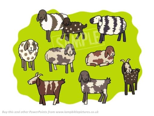 Spotty and stripy sheep and goats